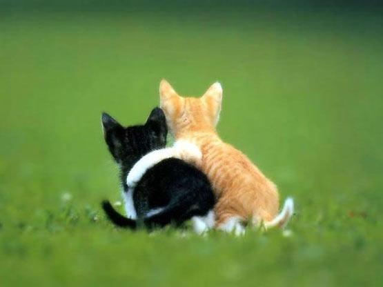 hugging kittens Tujuan dan Esensi Ospek Pengkaderan Massal