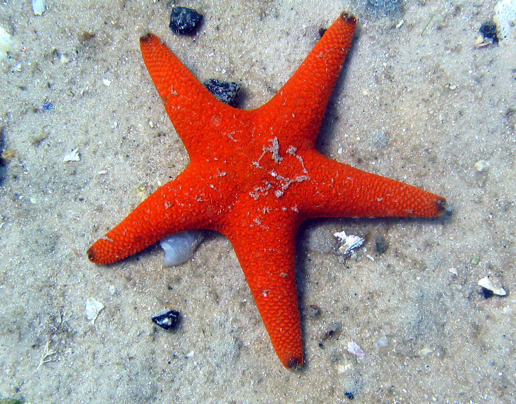 http://denisrahadian.files.wordpress.com/2008/09/starfish-1.jpg